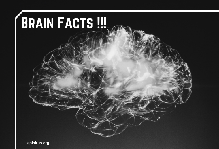 brain-facts-that-you-won't-believe